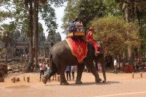 Achtung, Elefanten kreuzen
