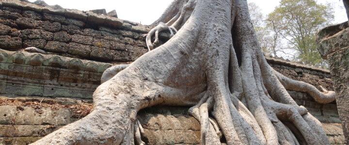 Fazit: Kambodscha