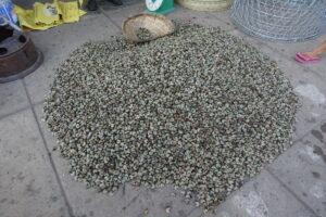 Cashew-Nüsse (nein, keine Bohnen)